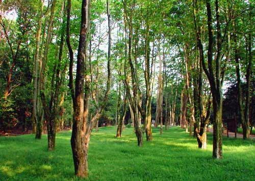 东台山国家森林公园
