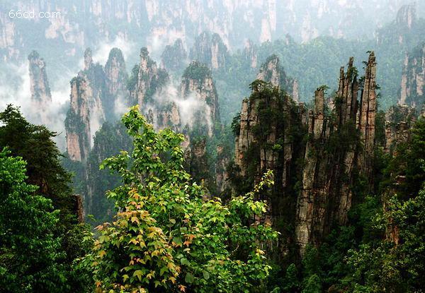 opebet国家森林公园  世界自然遗产两日游